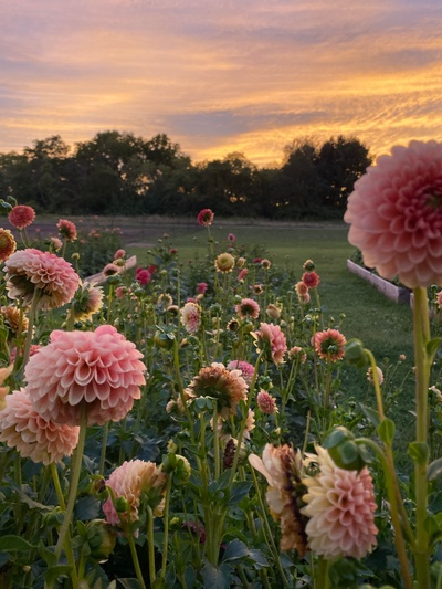 Muddy Acres Flower Farm Is Creating A Blooming Flower Farm And Sharing It With You Patreon